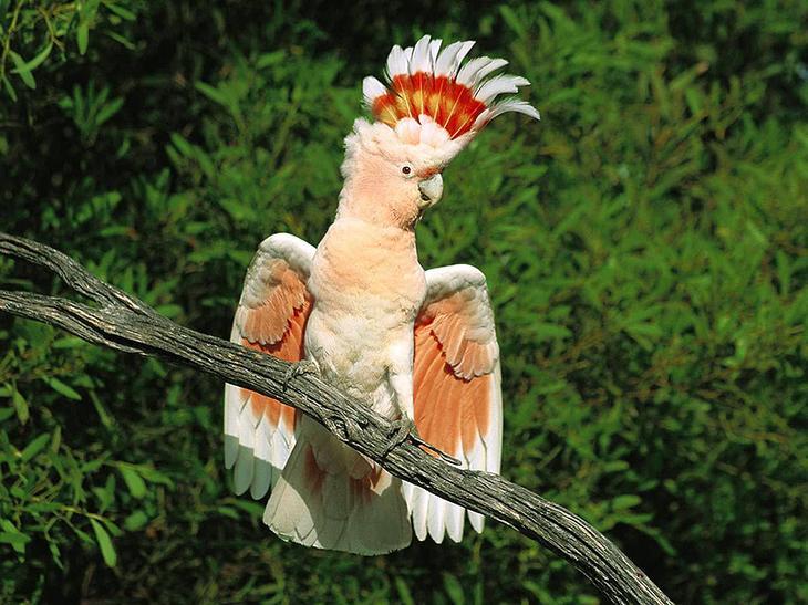 Самые красивые попугаи