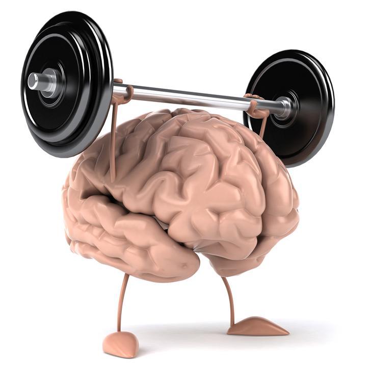 brain05 10 фактов о человеческом мозге