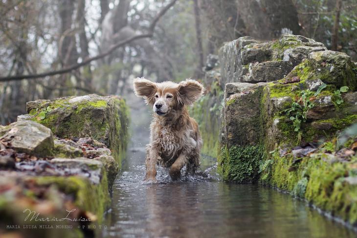 Фотографии собак - 17