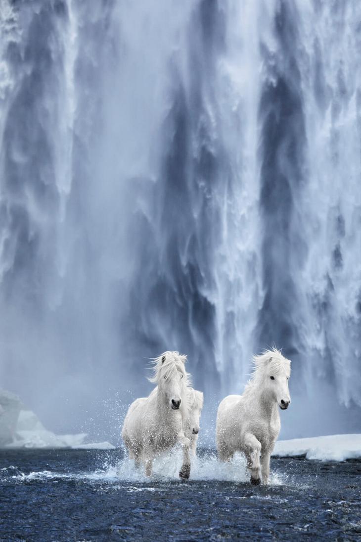 loshadi-Islandii-fotograf-Dryu-Doggett 9