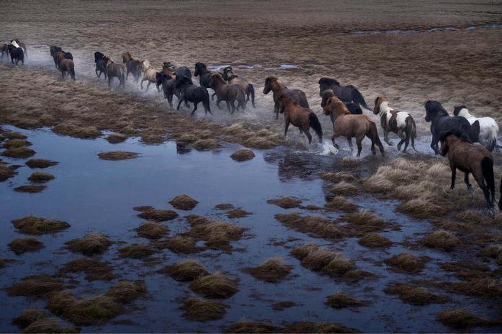 loshadi-Islandii-fotograf-Dryu-Doggett 4