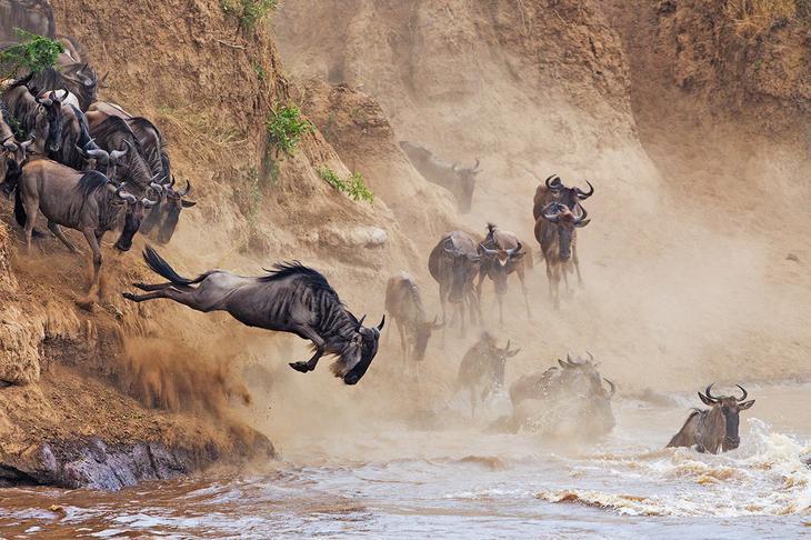 Переправа через реку с крокодилами в Масаи Мара