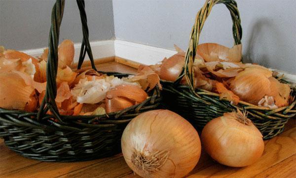 Применение луковой шелухи на огороде или саду, приготовление настоев и отваров