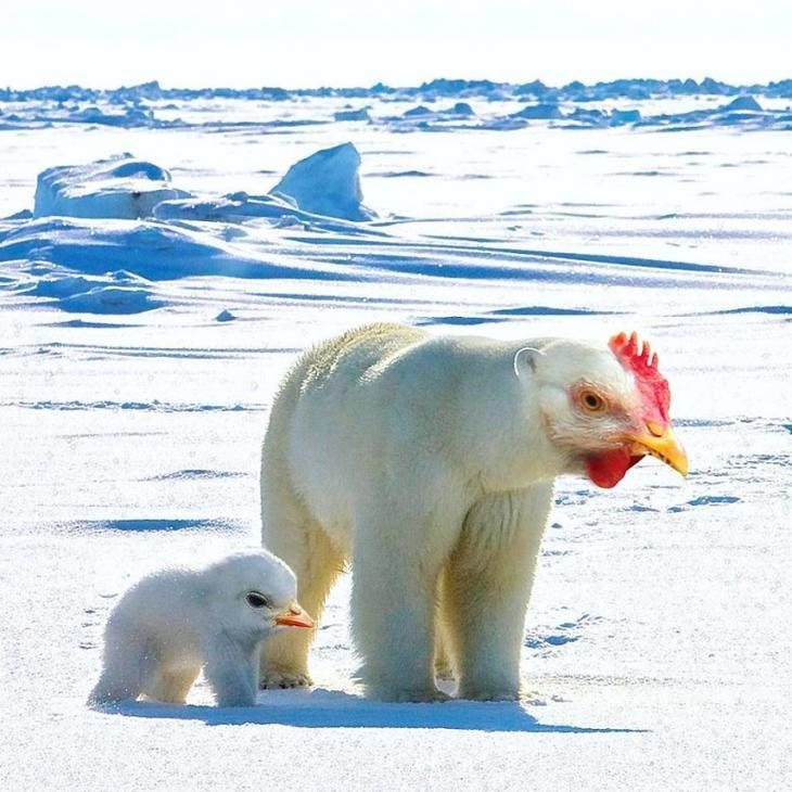 Художник создает новые виды животных с помощью фотошопа, Арне Олав Гурвин Фредриксен, Arne Olav Gurvin Fredriksen