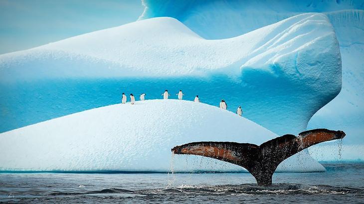 fotografii kitov 3