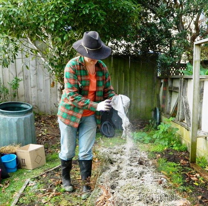Чем обработать капусту от вредителей народными средствами: как защитить