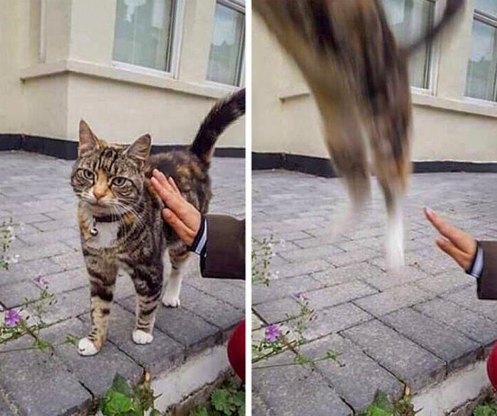 17 потешных снимков с котами, которые будто не от мира сего