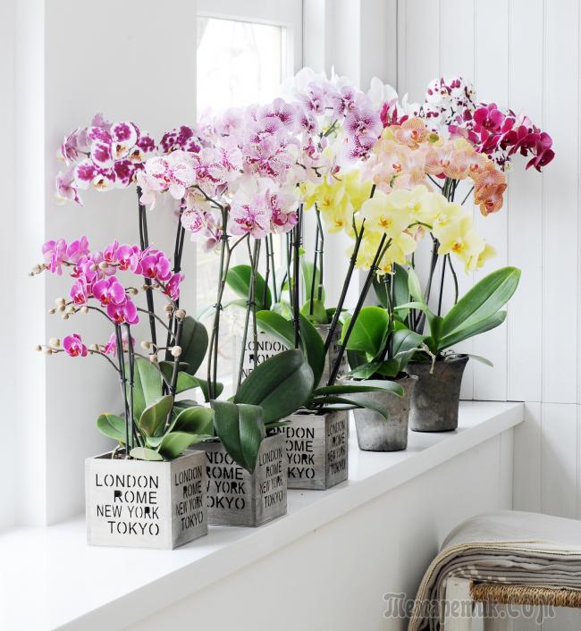 Как выглядит горшок для орхидеи