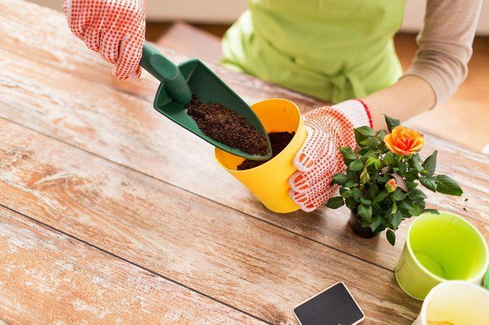 Янтарная кислота для подкормки растений