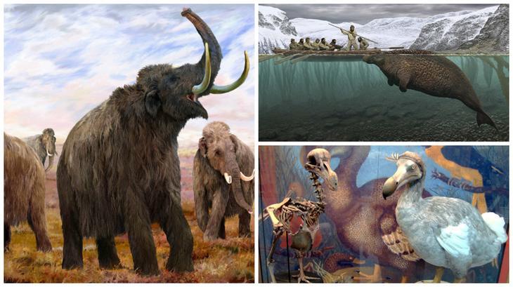 Животные, которых больше не существует по вине человека животные, интересное, природа, человек