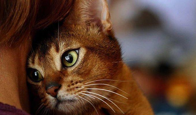 Как кошки очищают нашу жизнь от негативной энергии