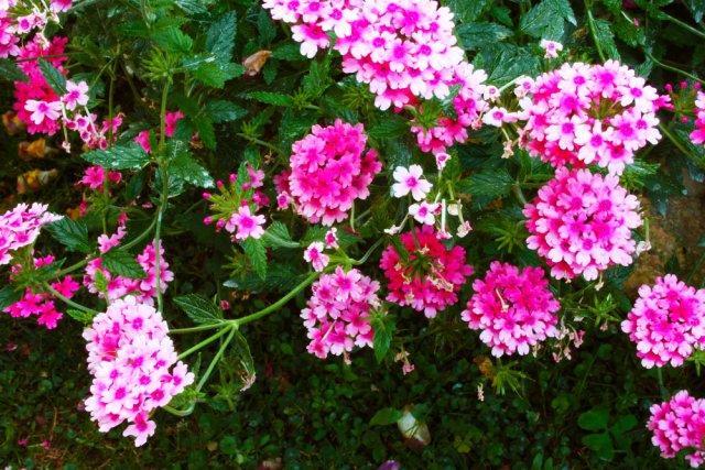 Какие цветы нужно сеять на рассаду в декабре и январе