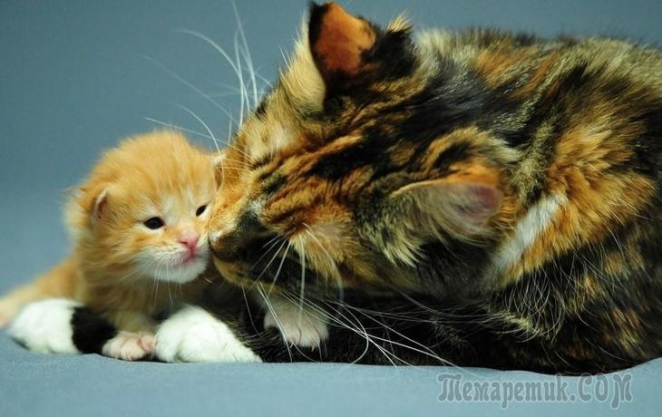 Трёхцветная кошка в доме: приметы