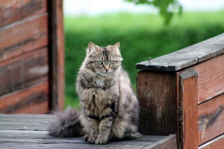 Почему кошка ждет нас у двери