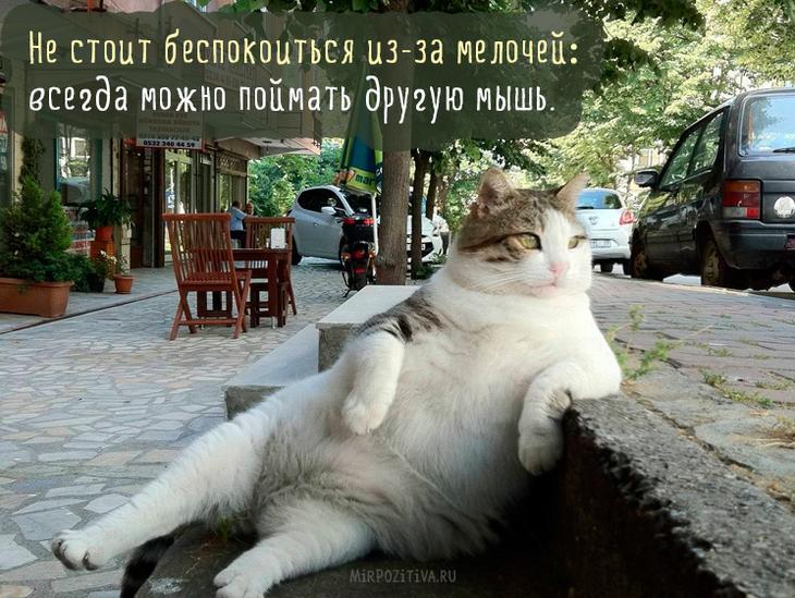 кот вальяжно сидит на скамейке