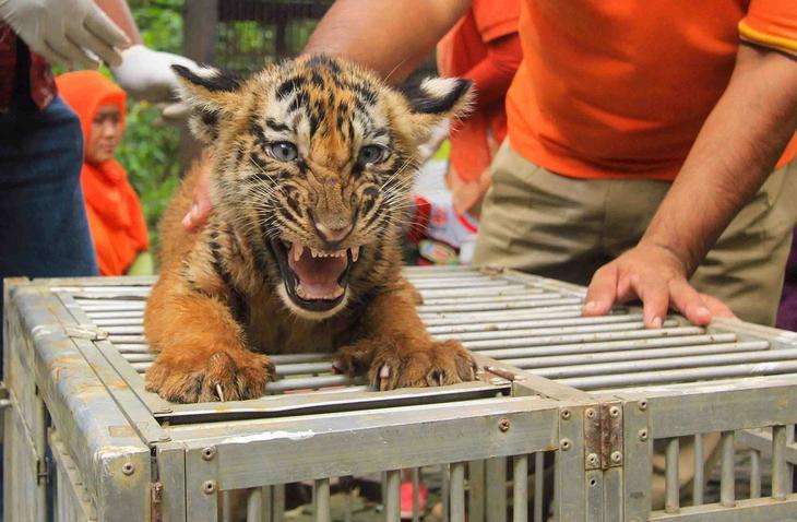 luchshee foto zhivotnyh s 26 yanvarya 1 Лучшие фотографии животных со всего мира за неделю