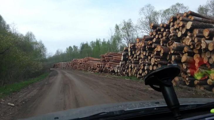 Китайцы полностью завладели сибирским лесом