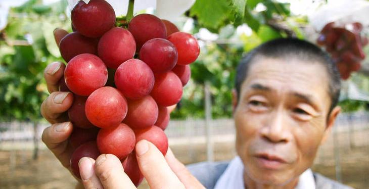 Costlyfruits03 Топ 10 самых дорогих продуктов мира
