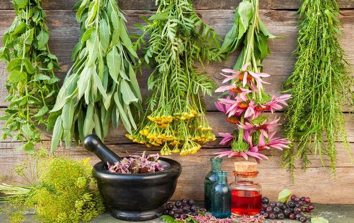Лекарственные растения, которые могут принести вред здоровью