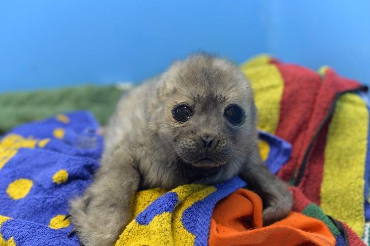 История тюлененка Крошика, который, видимо, считает себя котом