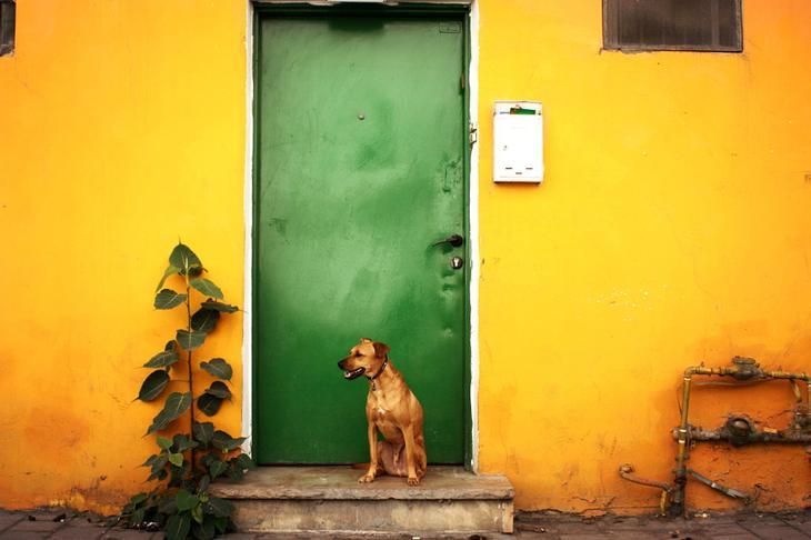 Фотографии собак - 3