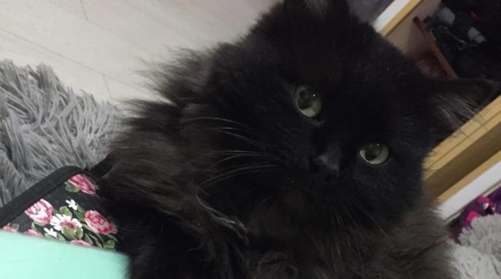 Бездомный кот притащил в чужой двор тощего избитого котёнка и скрылся
