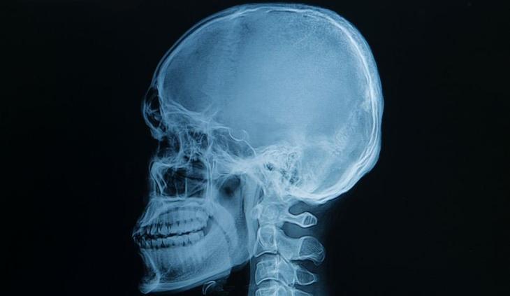 Лучше любого учебника: 20+ изображений об анатомии человека, которые вас удивят