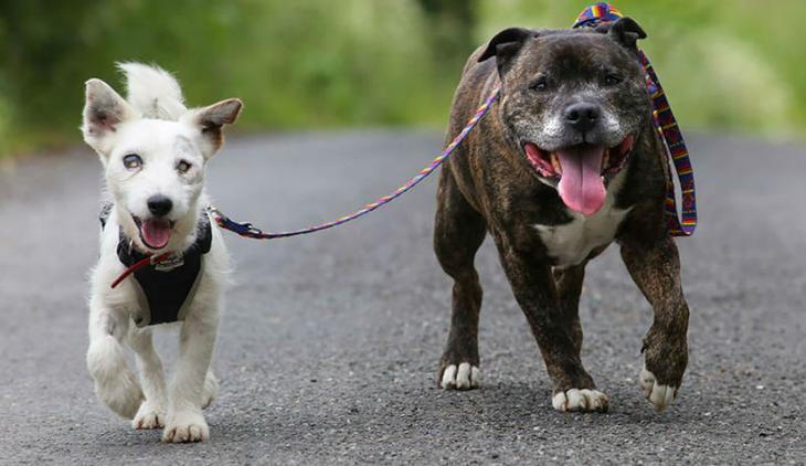 Такой дружбы вы еще не видели: Базз и слепой Гленн