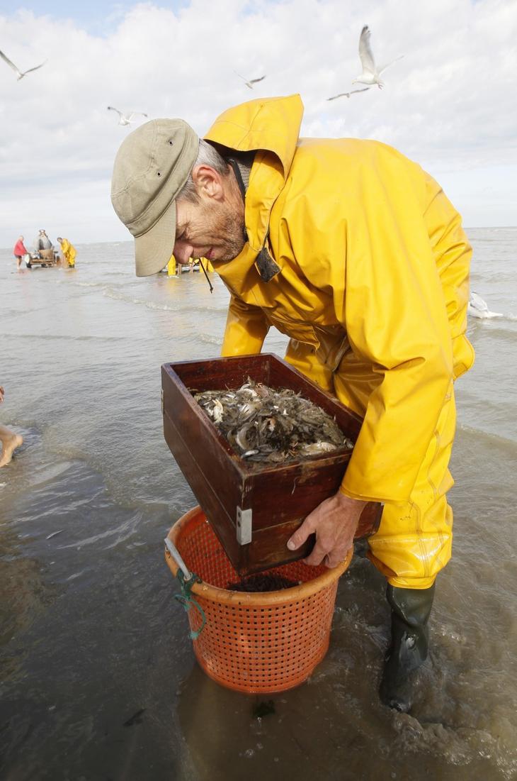 Где, как ловить креветку: ловля в черном море, видео, ловля рыбы на креветку