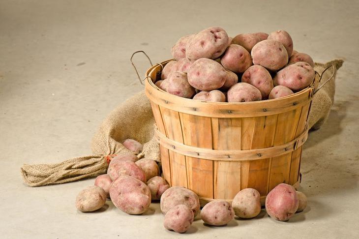 Посадка картошки по методу митлайдера