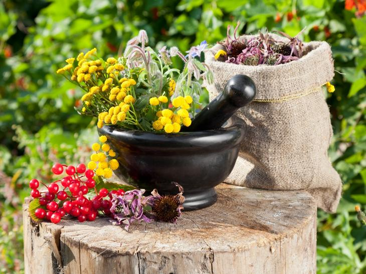 Лекарственные травы в борьбе с гипертонией