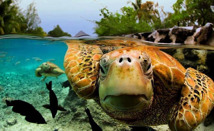 Подводный мир другими глазами. Фото