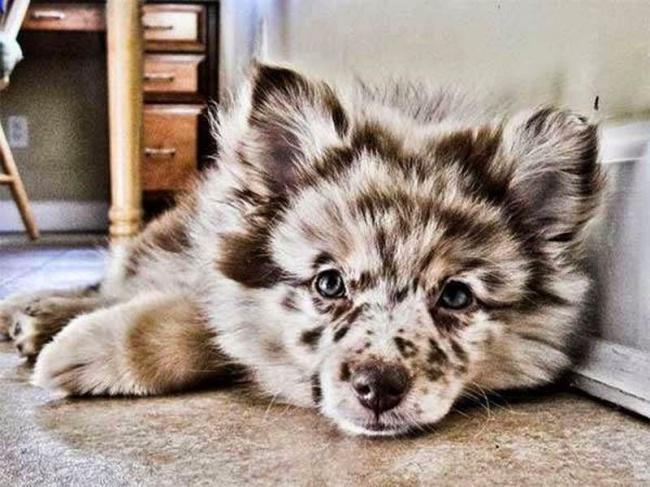 20 красивейших собак, которых природа одарила интересным окрасом
