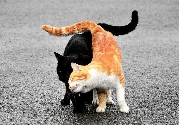 Кошки доказывающие, что любить может каждый