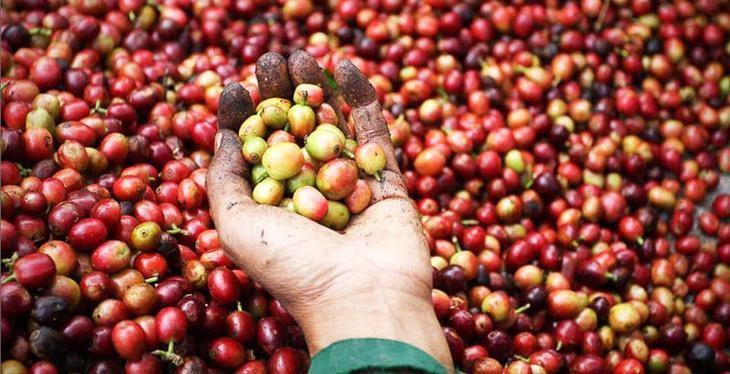 Costlyfruits10 Топ 10 самых дорогих продуктов мира