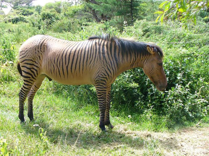 18 гибридных животных, в существование которых трудно поверить-3