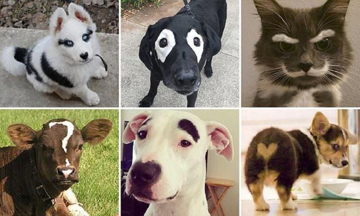 Ни на кого не похож: самые невероятные отметины у животных животные, забавно, кошки, необыкновенно, окрас, отметины, собаки, шерсть