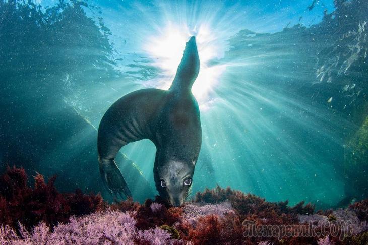 Лучший фотограф природы 2021 года