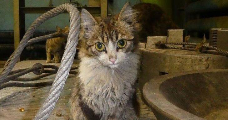 Работящие коты-заводчане: они никогда не скажут, что у них лапки