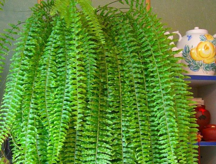 Водопад листьев папоротника