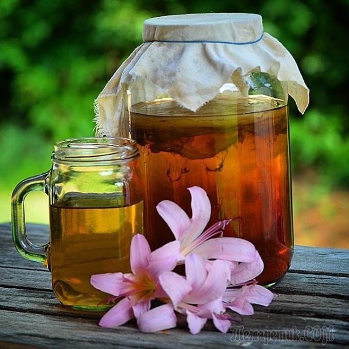 Болезни чайного гриба и их лечение
