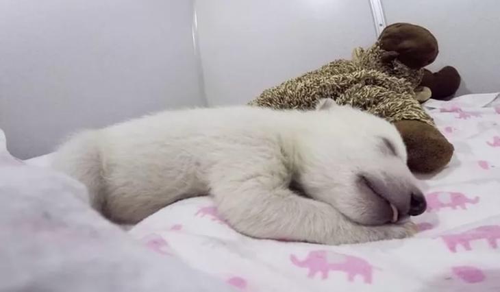 Медвежонок во сне — толкование образа по различным сонникам