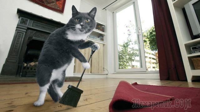 Запах кошачьей мочи в квартире Как избавиться от запаха кошачьей мочи