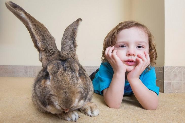 Кролики-великаны. Фото