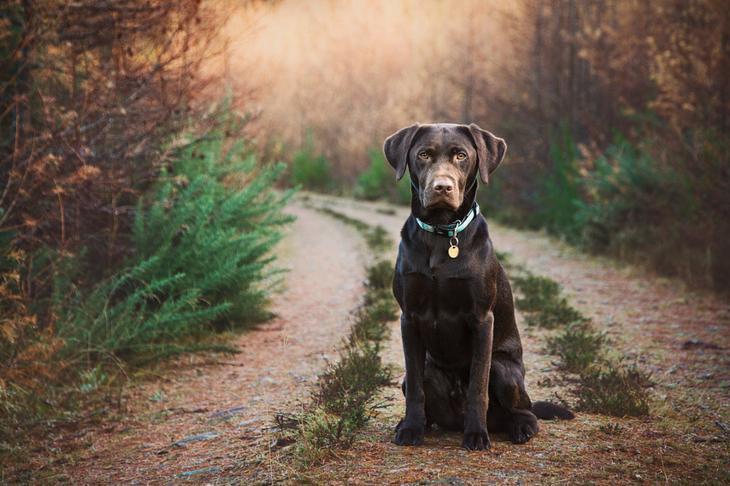 Фотографии собак - 5