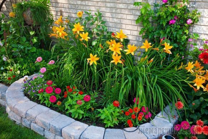 Клумба на участке: выбираем многолетние цветы для дачи