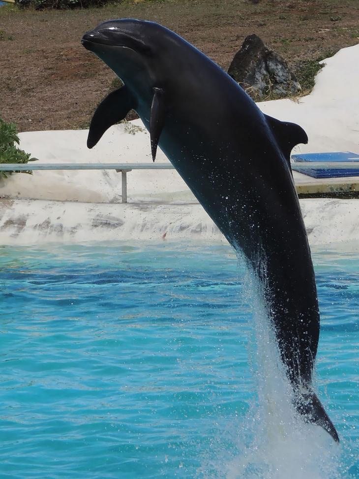 18 гибридных животных, в существование которых трудно поверить-8