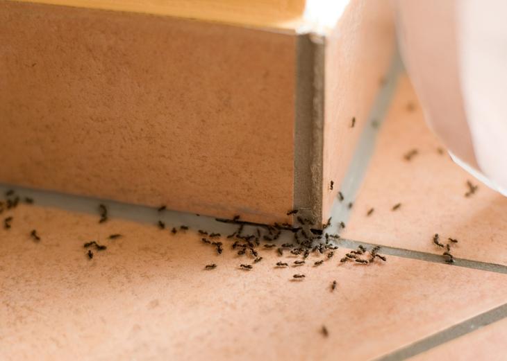 Способны ли муравьи причинить вред?