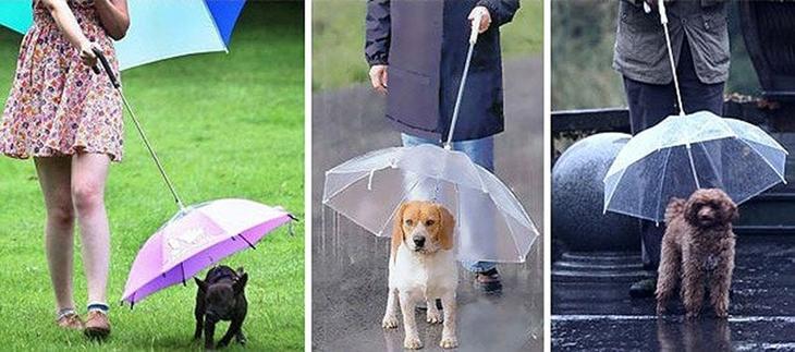 Umbrellas19 19 удивительных зонтов для осени