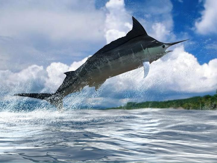 Голубой марлин . 10 самых больших рыб в мире. Фото с сайта NewPix.ru